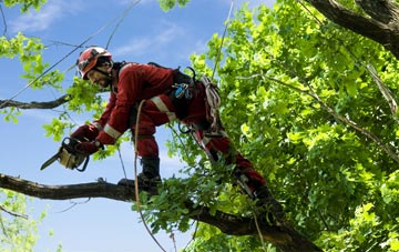 find trusted rated Queens Island tree surgeons in Belfast