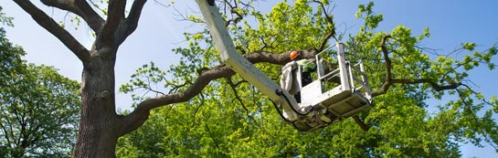 Queens Island tree surgery services